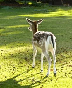 Trend zur Idealisierung der Natur - der Bambi-Effekt Herbert Walter Krick  / pixelio.de